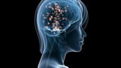 מוח אנושי (אילוסטרציה)
