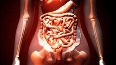 מערכת העיכול (אילוסטרציה)