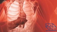 פורום מחלות כבד 2012