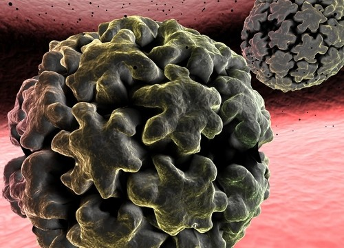 נגיף HPV (אילוסטרציה)