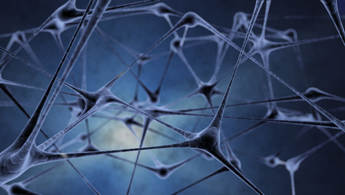 תא עצב (אילוסטרציה)