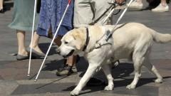 כלב נחייה מסייע לעיוורים (אילוסטרציה)