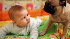 תינוקות חולים יותר כשיש כלב בבית (אילוסטרציה)