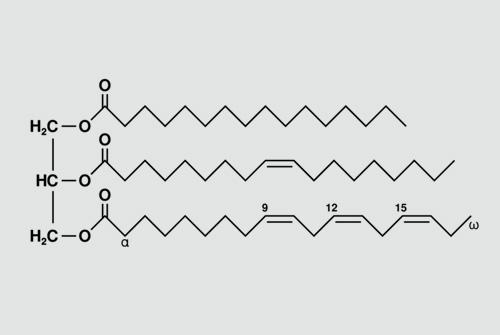 דוגמה לטריגליצריד בלתי רווי. משמאל, מולקולת הגליצרול, אליה מחוברים מימין שלוש חומצות שומן שונות (מקור צילום: ויקיפדיה)