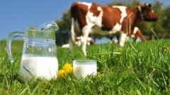 חלב פרה (צילום: אילוסטרציה)