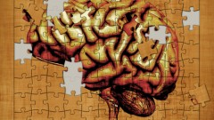 המוח האנושי (איור אילוסטרציה)