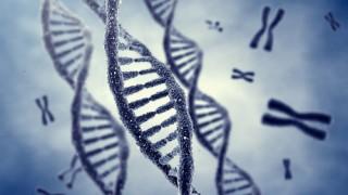 ד-נ-א וכרומוזומים (איור: אילוסטרציה)