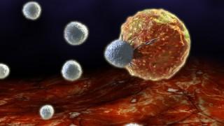 תאי T תוקפים תא סרטן (איור: אילוסטרציה)