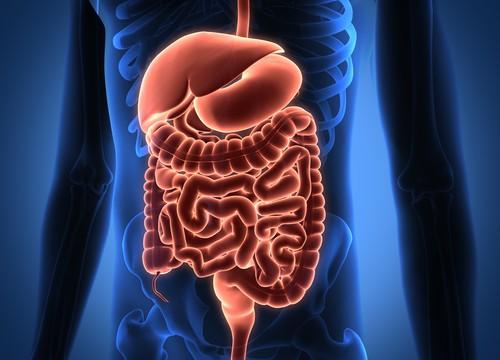 מערכת העיכול, קוליטיס (צילום: אילוסטרציה)