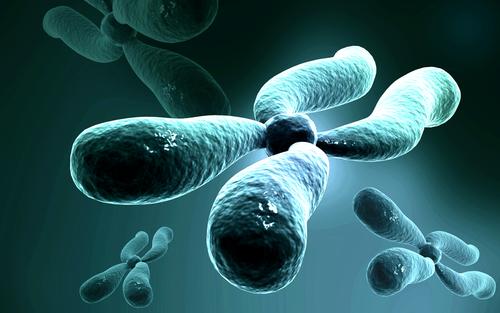 כרומוזום X, גנטיקה (צילום: אילוסטרציה)