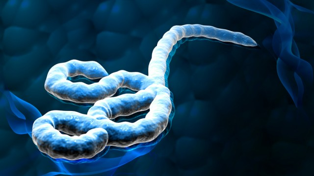 נגיף אבולה (צילום: אילוסטרציה)