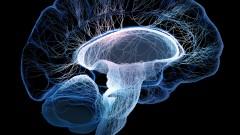 מוח (צילום: אילוסטרציה)