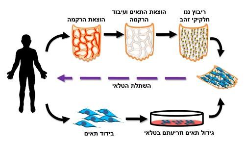 איור הממחיש את התהליך (מקור: אוניברסיטת תל אביב)