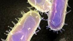 החיידק ירסיניה פסטיס, הגורם לדבר (הדמיית אילוסטרציה)