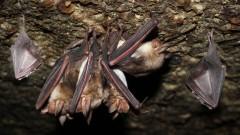 מושבת עטלפים (צילום: אילוסטרציה)