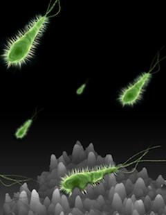 סימולציה של הגעת חיידקים למבנה המרוכב הפוגע בהתישבותם (מקור: אוניברסיטת בן-גוריון)