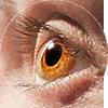 eyes2-1
