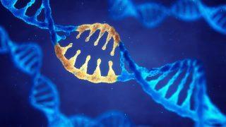 ביטוי גנטי, מחלות תלויות גיל וכמות ה-DNA המיטוכונדריאלי בדם - הילכו יחדיו?